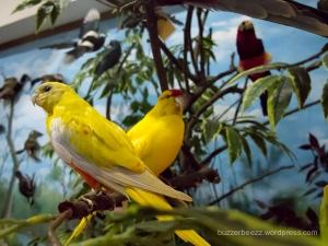 Satwa burung yang diawetkan