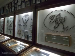 Serangga penghuni museum