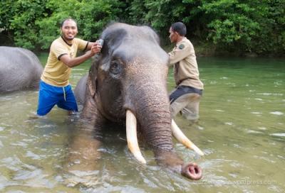 Memandikan gajah di sungai, Sampoiniet, Aceh Jaya