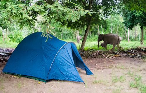 Berkemah di dekat kandang gajah