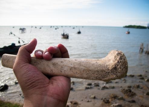 Tulang yang saya temukan di pantai