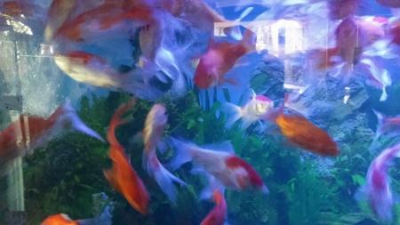 Koleksi ikan lain di Purbasari Pancuran Mas